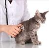 Ветеринарные клиники в Кожино